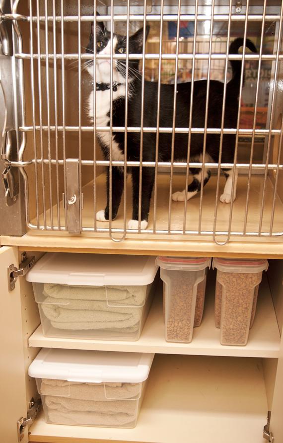 1644-0316-Cat-Shelter