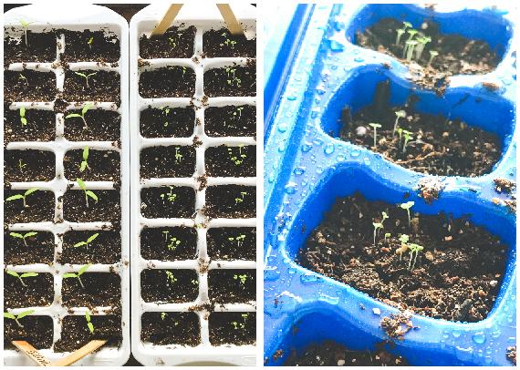 Seeds-004